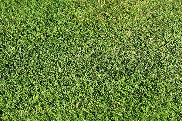 Augusti är en utmärkt månad för att anlägga ny gräsmatta